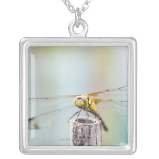 Dragonfly (Sympetrum infuscatum) 2 Silver Plated Necklace
