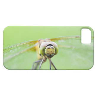Dragonfly (Sympetrum infuscatum) Case For The iPhone 5