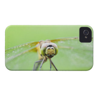 Dragonfly (Sympetrum infuscatum) iPhone 4 Case