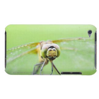 Dragonfly (Sympetrum infuscatum) iPod Touch Case-Mate Case