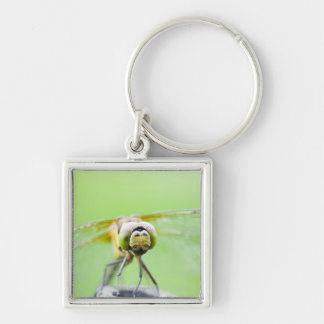 Dragonfly (Sympetrum infuscatum) Silver-Colored Square Key Ring