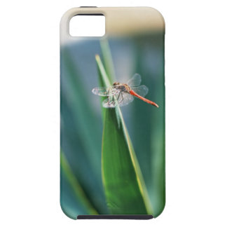 Dragonfly Tough iPhone 5 Case