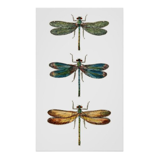 Dragonfly Trio Poster