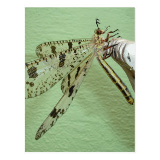 Dragonfly Wings Postcard