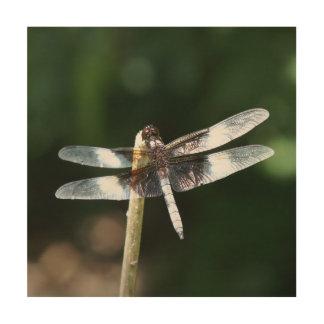 Dragonfly, Wood Photo Print. Wood Canvas