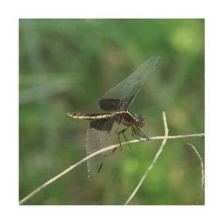 Dragonfly, Wood Photo Print. Wood Wall Decor