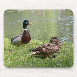 Drake and duck in the wild mouse mat