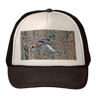 Drake mallard in flight cap