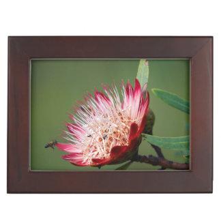 Drakensberg Sugarbush (Protea Dracomontana) Keepsake Box