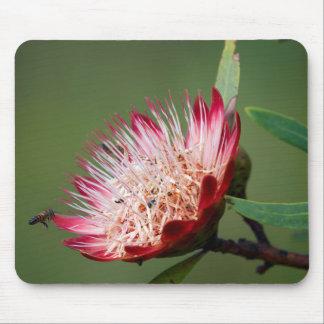 Drakensberg Sugarbush (Protea Dracomontana) Mouse Mat