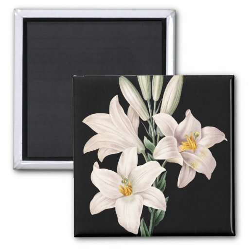 Dramatic Black and White Lilies Fridge Magnets