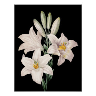 Dramatic Black and White Lilies Poster
