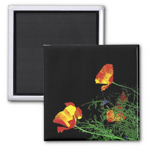 dramatic California poppies on black Refrigerator Magnets
