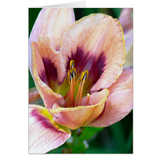 DRAMATIC CLOSE-UP OF DAYLILY/BURGUNDY/PALE PINK/YE NOTE CARD