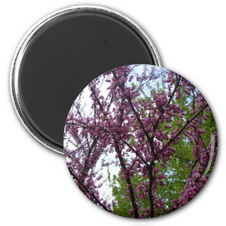 Dramatic Deep Pink Flowering Trees New York City Magnets