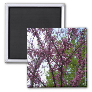 Dramatic Deep Pink Flowering Trees New York City Square Magnet