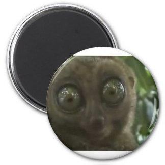 Dramatic Lemur Fridge Magnets