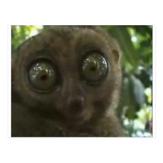 Dramatic Lemur Postcard
