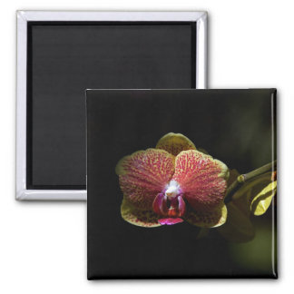 Dramatic Orchid Square Magnet