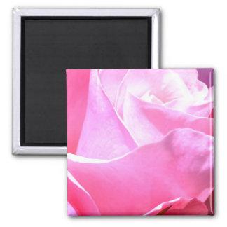 Dramatic Pink Rose Fridge Magnet