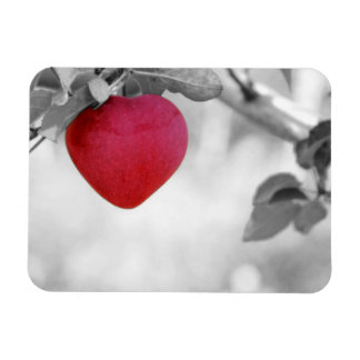 Dramatic Red Heart Shaped Apple Rectangle Magnets