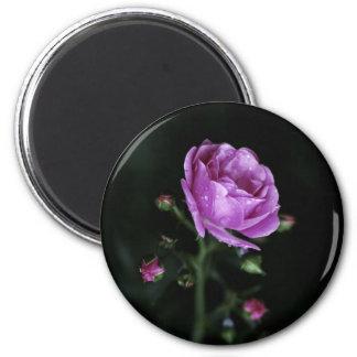 Dramatic Rose 6 Cm Round Magnet