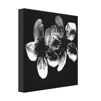 Dramatic White Cherry Blossoms On Black Canvas Print