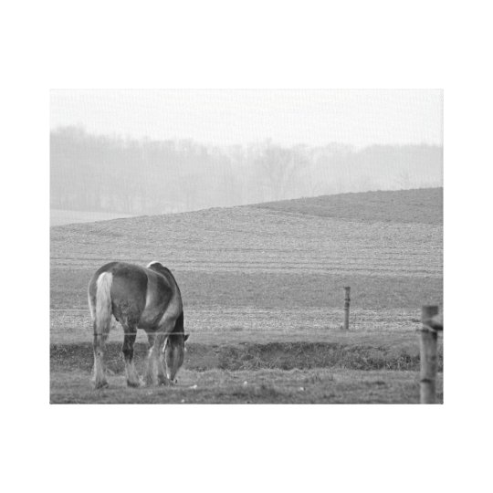 Draught Horse in Black and White Canvas Print