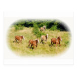 Draught   horses in field postcard