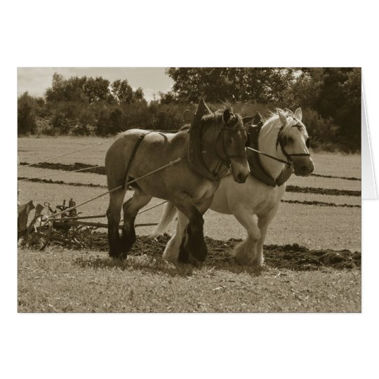 Draught horses ploughing birthday card