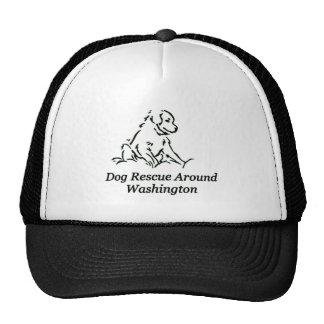 DRAW hats
