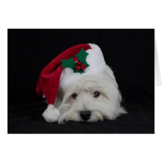 Dreamer the pesky westie Christmas Card