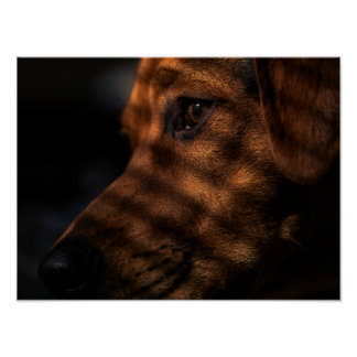 Dreaming Dog Poster
