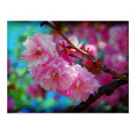 Dreamland, Cherry blossom in Korea