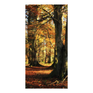 Dreamy Autumn Woodland Personalized Photo Card