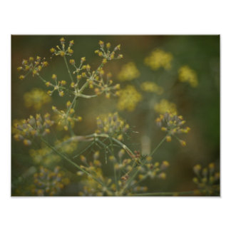 Dreamy Dill in the Garden Poster
