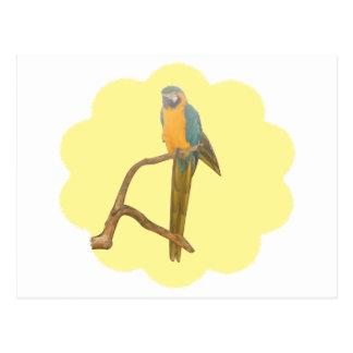 Dreamy Macaw Postcard