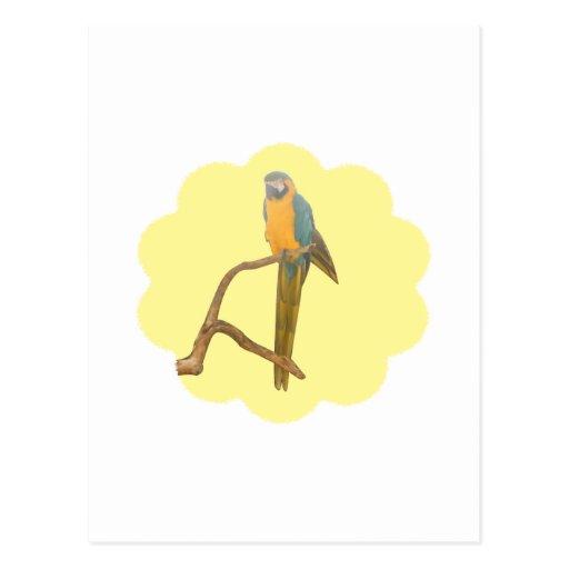 Dreamy Macaw Post Cards