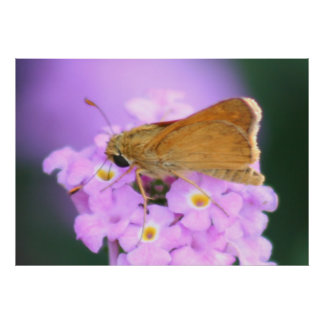 Dreamy Moth Print