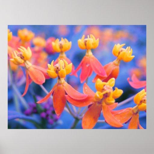 Dreamy Orange Flowers Poster