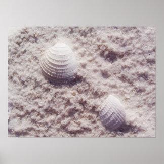 Dreamy Shells Art Poster Print
