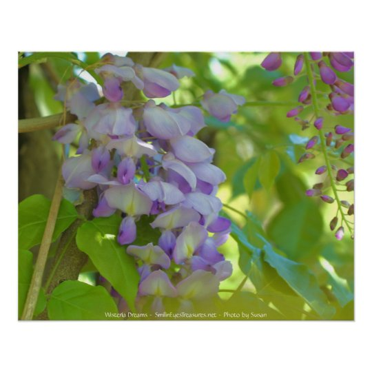 Dreamy Wisteria Flower Photography Poster Print