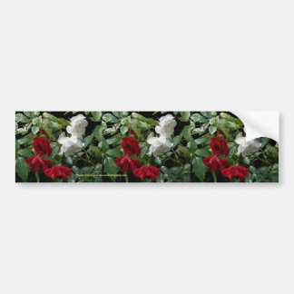 Drenched Roses Flower Bumper Sticker Car Art