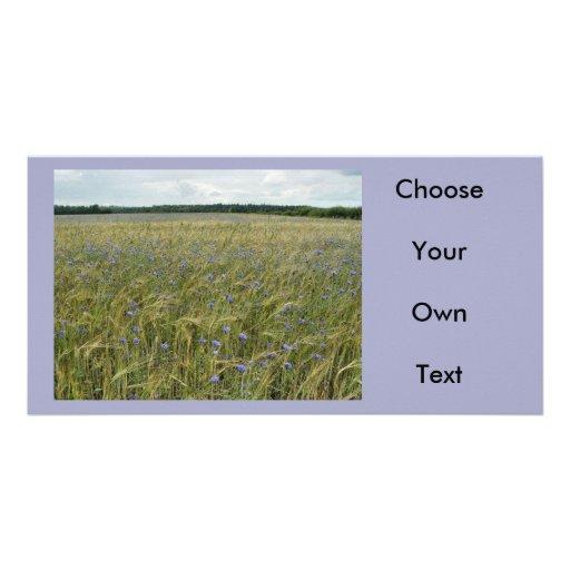 Drenthe - Corn Flower field Photo Card Template
