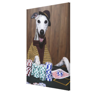Dressed up Whippet dog at gambling table Canvas Print