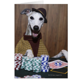 Dressed up Whippet dog at gambling table Card