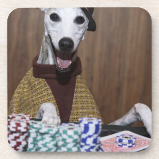 Dressed up Whippet dog at gambling table Coaster