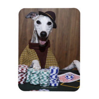 Dressed up Whippet dog at gambling table Magnet
