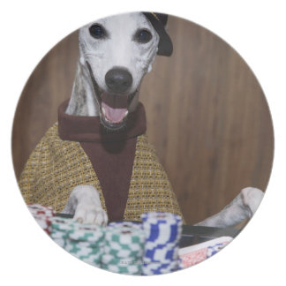 Dressed up Whippet dog at gambling table Plate