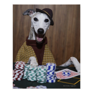 Dressed up Whippet dog at gambling table Poster
